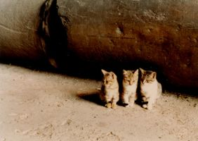 Little Lions of the Colosseum by JulianasGrandma