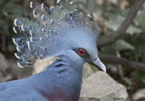 Victoria Crowned Pigeon by Vertor