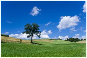 hill surfing tree by maniacmadcap