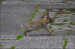 Young Rabbit by FrankAndCarySTOCK