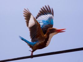 Ungainly Pose by InayatShah