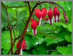 Red hearts on green by Mogrianne