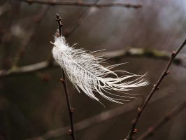 white feather... by Vrbize