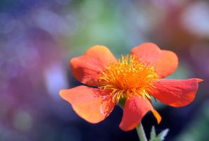 sunbathing flower by asia1573