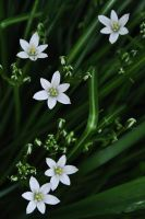 White On Greens by TheMetronomad