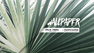 Palm Trees [ wallpaper ] by tropicsong