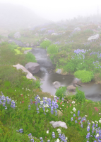 Foggy River by Reshiram6