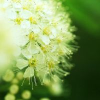pins and dots II by indojo