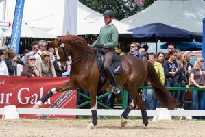 High Forearm Extended Trot Chestnut WB by LuDa-Stock