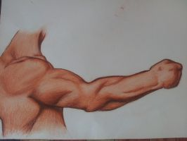 Drawing Exercise: Muscles by DaphYin