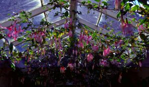 Hothouse Flowers at Night by Forestina-Fotos
