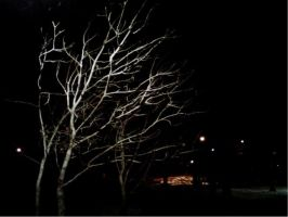 Skeletal branches.. by cryptwish