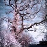 Sprimg Tree infrared by MichiLauke