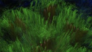 Mossy Stream by cmcougar