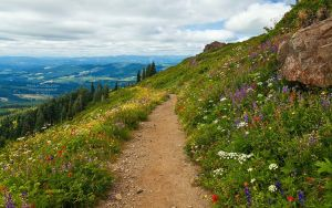 Silver Star Mountain Trail by La-Vita-a-Bella