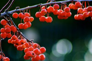 Red little balls by truman1012