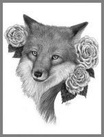 Red Fox White Rose - pencil by LisaCrowBurke