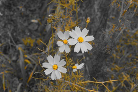 Flowers for the color blind by Emery-L