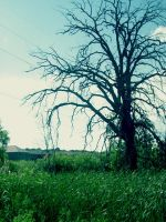 Death in Spring Time 02 by KatVonB