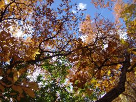 fall in colorado 3 by starlitefairy24