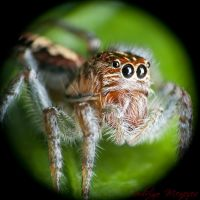 Jumper Portrait II by ironmanbr