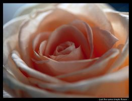 -just the same simple flower- by robertodecampos