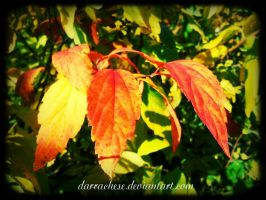 fire leaves by DarraChese