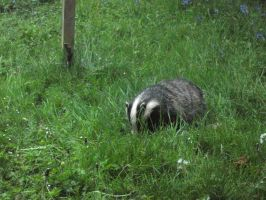 Badger by UndertakerisEpic