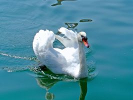 swan 2 by clandestine-stock