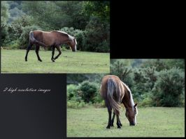 New Forest Pony Grazing Pack by neverFading-stock