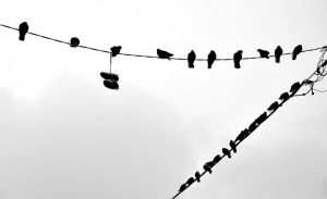 Birds and a pair of shoes. by Tharwaithiel