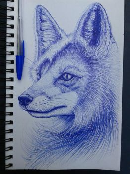 Fox by coffirish