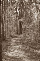 pathway by capricious23pictures