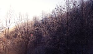 Glorious morning by Morna