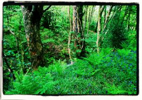 Bluebell wood by J-Philip