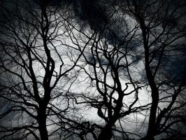 Dark branches by MEW0