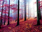 forest.. by impatienss