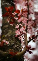 Cherry Twig by DYWPhotography