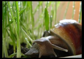 Snail and grass. by Akazum