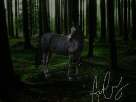 In the forest by EnchantedEquine