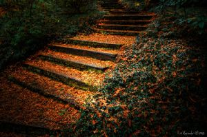 Light Falls on Absence Steps by UrbanRural-Photo