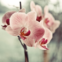 Orchids by ifsantag