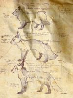 Evolution Stages - Poochyena by pokeguide