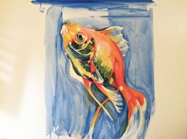 Goldfish by PorcelainGoldfish