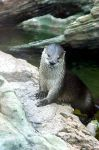 Otters VII by LDFranklin
