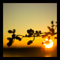 Seeds Of The Sun by Alphaon