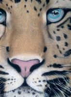 Leopard by Domenique2