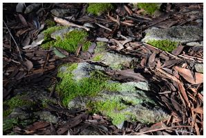 Mossy Rocks by Belldandy1