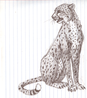 Cheetah kitty by DrakenHeart219