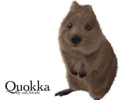 Quokka Illustration by saChicals